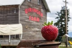 Biringer_Farms