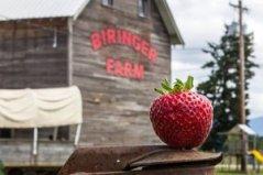 Biringer_Farms